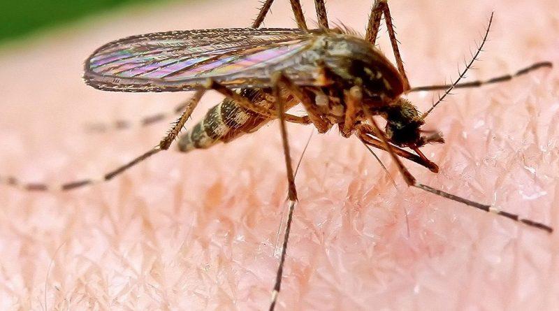 Пийте този витамин и забравете за проблемите които причиняват комарите